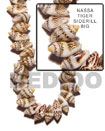Nassa Tiger Shell Beads